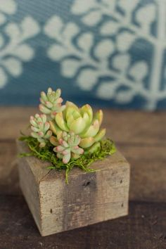Made locally from reclaimed redwood, these little boxes are a great way to display succulents on tables and windowsills.