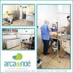 MV. Mussi A. de Lacerda  Arca de Noé Centro Veterinário 24 h R. Visconde do Rio Branco 1362 Ribeirão Preto- SP (16) 2111-8181/ 98149-3071  arca@arcadenoehv.com.br  #clinicaveterinaria #cães #gatos #Dog #dogs  #doglovers #dogsofinstagram #veterinaria #clinicas #ribeiraopreto #franca #jardinopolis #batatais #serrana #ribeirao #ribs #pets #spitz #cats #kitten #pomeranian #saopaulo #oscarfreiresp #life #petshop #puppy #rio #usp #unaerp #unesp