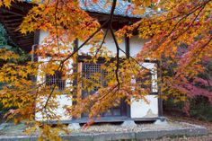 One of the pavilions of the Shōbō-ji Temple (正法寺) in Wazuka County During the Autumn Season of 2013 in Kyoto!  #Shōbōji, #Wazuka, #Kyoto, #autumn,#正法寺