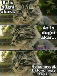 Grumpy Cat, Funny Pins, Funny Cute, Life Hacks, Jokes, Lol, Cats, Meme, Drink