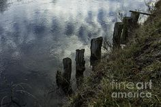 Old Dock Supports Along the Canal Bank - No 1 - Belinda Greb