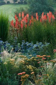 BORDER WITH KNIPHOFIA TIMOTHY, ACHILLEA TERRACOTTA, STIPA TENUISSIMA AND ERYNGIUM 'PICOS BLUE'
