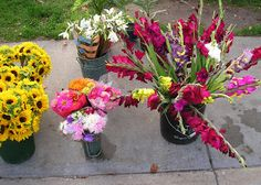 Sunflowers, Zinnias and Gladiolas at the Goderich Farmers Market, downtown Goderich Ontario.
