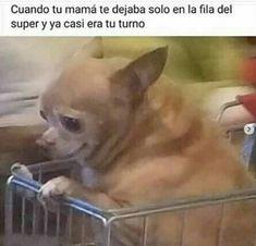 Really Funny Memes, Stupid Funny Memes, Funny Quotes, Hilarious, Funny Gifs, Funny Humor, Funny Spanish Memes, Spanish Humor, Animal Jokes