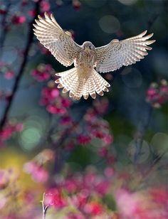 Beautiful bird, beautiful photography!