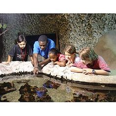 Florida Ecoscapes at Museum of Discovery and Science Fort Lauderdale, FL #Kids #Events