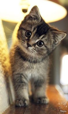 Super cute kitten
