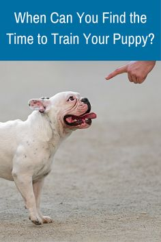 It doesn't have to be a lengthy session each day. Follow these steps to work dog training into your busy schedule!
