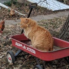 I'm ready. Let's go, mom! 🥳  #sillygato #catsagram #catlife #radioflyer #letsgo #kittykitty #catslife #kučka #gatos #catsareweird