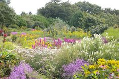 The tremendous display of hardy perennials in the Lawned Garden at Breezy Knees. at Warthill near York.