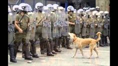 Who's in charge? A dog barks at a formation of riot police near the Greek parliament in Athens, Greece. by Pascal Rossignol Wonderful Picture, Weird And Wonderful, Photo Rock, Animal Tracks, Riot Police, Dog Barking, Belle Photo, Dog Pictures, Cool Photos