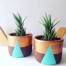Resultado de imagen para cactus chilenos