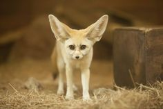 Cute Animal Memes, Cute Animal Videos, Cute Animal Drawings, Cute Animal Pictures, Cute Funny Animals, Cute Baby Animals, Fox Species, Animal Cartoon Video, Cute Animals Puppies