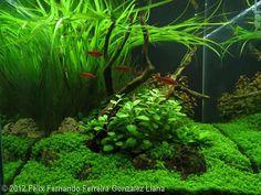 2012 AGA Aquascaping Contest - Entry #389
