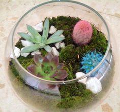 Terrario en cristal