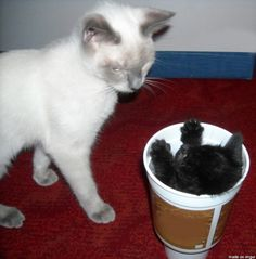 """""""What are you talking about? My name is not Coffee!!"""" Photo via Imgur"""