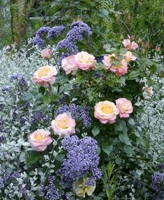 The Gardens of Petersonville: Artful Companions,'French Perfume' Rose, purple statice (limonium), gray licorice plant (helichrysum) My Secret Garden, Dream Garden, Blue Garden, Garden Inspiration, Garden Plants, Fruit Garden, House Plants, Planting Flowers, Climbing Roses