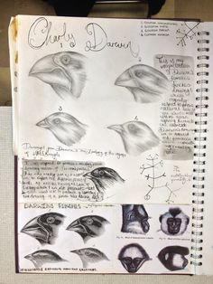 Lauren, Visual and written research St Mary's Catholic High School Gcse Art Sketchbook, Drawing Journal, Sketchbook Ideas, Sketchbook Inspiration, Sketchbook Assignments, Art Assignments, Catholic High, A Level Art, Visual Diary