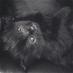 #black #kitten #bigeyes #cute #adorable #petstagram #flyffy #art Black Kittens, Big Eyes, Photo And Video, Pets, Animals, Instagram, Animaux, Animal, Animales