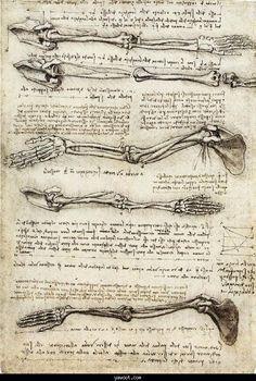 Skeleton Arms