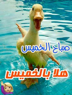 64 Best الخميس Images Arabic Funny Arabic Quotes Funny Arabic