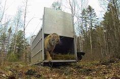 [CasaGiardino]  ♡  First Taste Of Freedom For 6 Overjoyed Animals Caught On Film | IFLScience