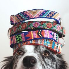 Colorful dog collars from Tail Wag! Check out more of the best products on the web, curated by Shopify