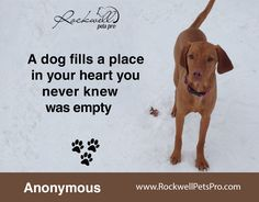 A dog fills a place in your heart you never knew was empty.  www.rockwellpetspro.com #Dog