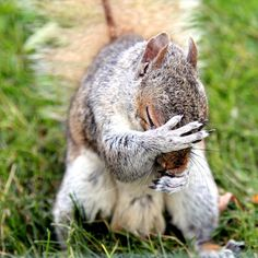 I lost my nuts!
