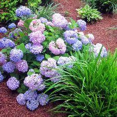 Best Low Maintenance Shrubs or Flowers for Your Yard - InfoBarrel for back corner of back deck that never gets sun