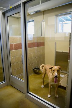 I like the stain of the concrete floor, the fact that there are windows in each kennel, the water fountain unit, and the glass wall/door.