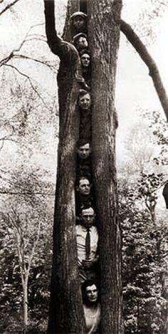 Dans le creux de l'arbre