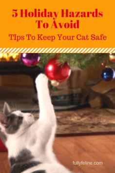 Cat safety can be a