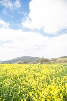 Charming Travels: What to do in Ojai