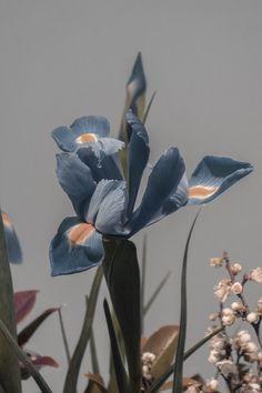 A E L L A #Flora&Fauna-Flowers&Plants