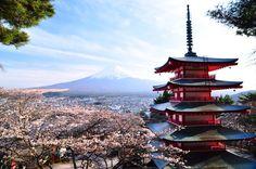 Le temple en Japon est esthetique. Je pense que le temple est très calme et relaxant. Le montagne en l'arrière-plan est représenter le nature solide. J'adore la fleur de cerisier parce que j'aime le rose et les fleurs.