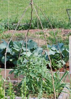 An Inexpensive Homemade Tomato Cage - Growing The Home Garden Tomato Trellis, Tomato Garden, Tomato Plants, Tomato Cage, Garden Art, Garden Tools, Home And Garden, Garden Ideas, Tomato Stakes