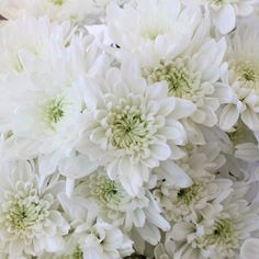 FiftyFlowers.com - Kiss of Mint Dahlia Style Flower