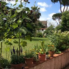 Scorcio del giardino ☀️
