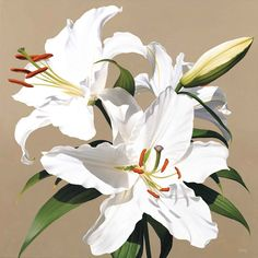White Lily II by Linda Alexander, Fine Art Greeting Card, Oil, White lily Lily Painting, Oil Painting Flowers, Watercolor Flowers, White Lily Flower, White Flowers, Lilies Flowers, Flowers Garden, Yellow Roses, Purple Flowers