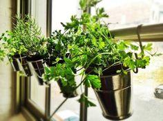 "Top Ten Ikea Hacks of 2012 - Planter Rail.  A fun idea for a window herb garden using a rail and ""S"" hooks. Garden Windows, Garden Plants, Green Garden, Indoor Plants, House Plants, Indoor Garden, Herb Garden In Kitchen, Kitchen Herbs, Home And Garden"