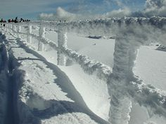 Nebelfrost
