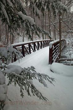 ~Snow covered bridge .. looks like the perfect place to ride on a one horse open sleigh. :D ~