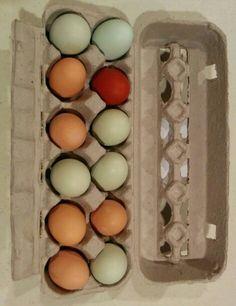 Farm fresh eggs, all original colors.
