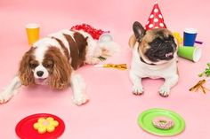 It's time to celebrate - it's #FidoFriday and we've got a #FridayFeeling! #HealthyPetsInsurance