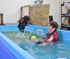 A trained canine hydrotherapist will know how to make a hydrotherapy session not only safe - but fun for your dog! Like Guese jumping here!