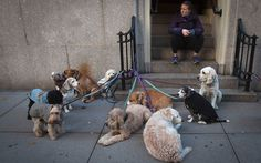 Dog walker Silvia Anita sits on a step with the dogs she is going to walk on the Upper East Side of the Manhattan borough of New York Picture: REUTERS
