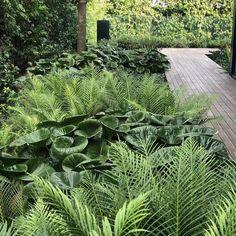 На данном изображении может находиться: растение, дерево, на улице и природа
