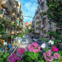 Darling streets of Beirut.