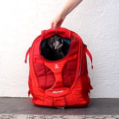 The Kurgo Dog Backpack Carrier is a great way to bring your dog with you on all your adventures. This functional bag is a blend of comfort, and durability making it a must-have for small dog owners. Jacky, Frozen Dog, Pet Bag, Dog Car Seats, Dog Halloween Costumes, Dog Costumes, Pet Carriers, Small Dog Carriers, Dog Travel